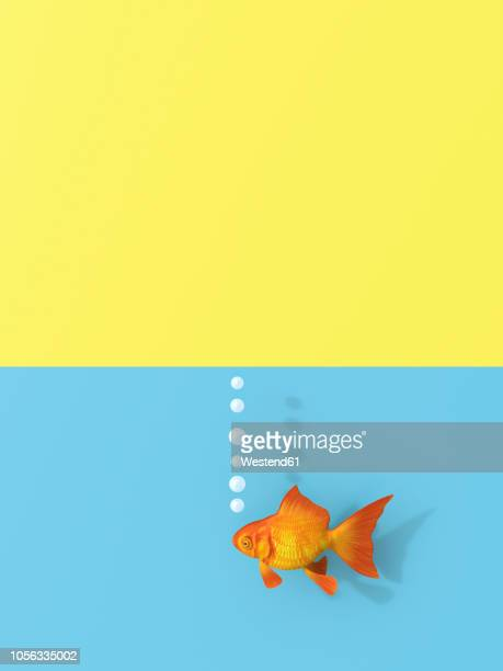 3D rendering, Goldfish swimming in water