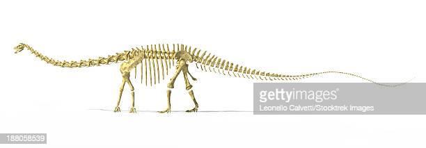 ilustraciones, imágenes clip art, dibujos animados e iconos de stock de 3d rendering of a diplodocus dinosaur skeleton, side view. diplodocus was a giant herbivorous dinosaur of the late jurassic period. - triásico