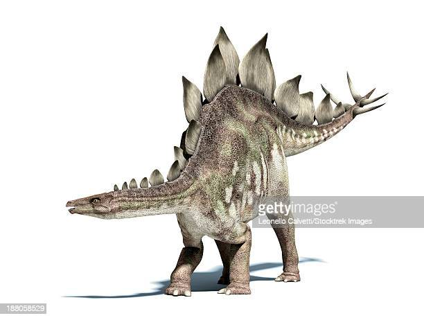 3d rendering of a stegosaurus dinosaur. - scute stock illustrations, clip art, cartoons, & icons