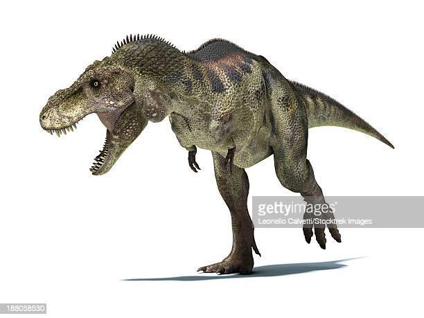 3d rendering of a tyrannosaurus rex dinosaur. - roaring stock illustrations