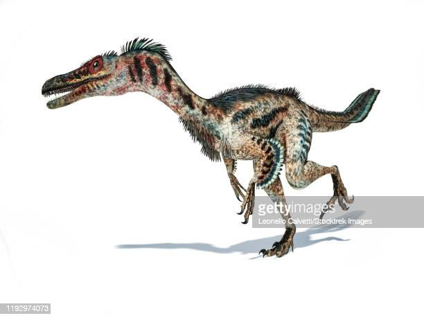 3d rendering of a velociraptor dinosaur with feathers. - dromaeosauridae stock illustrations
