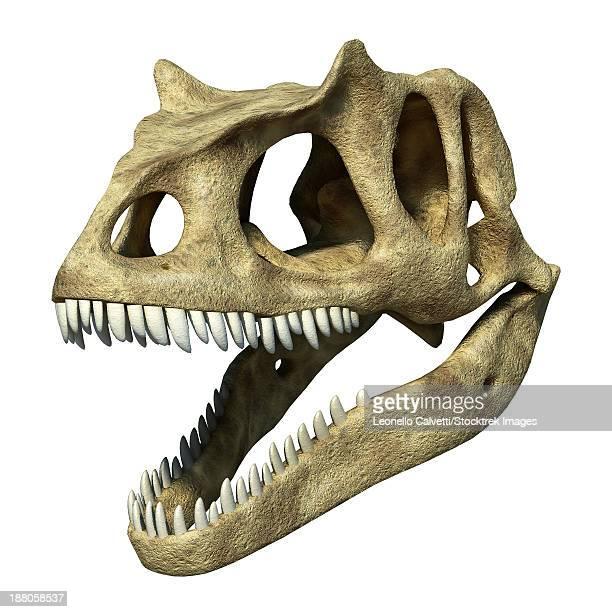 3D rendering of an Allosaurus skull.