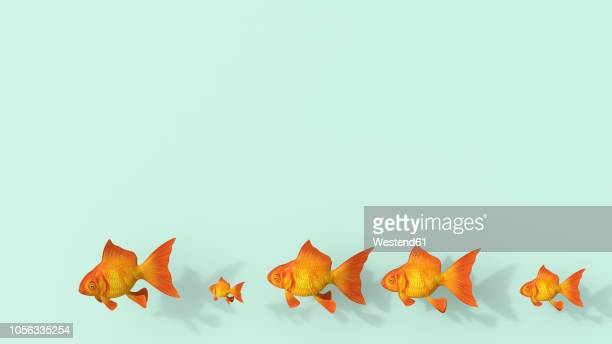 3d rendering, row of different goldfish on green background - following stock illustrations