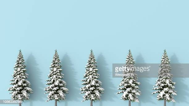3D rendering, Row of snow covered fir trees blue on background