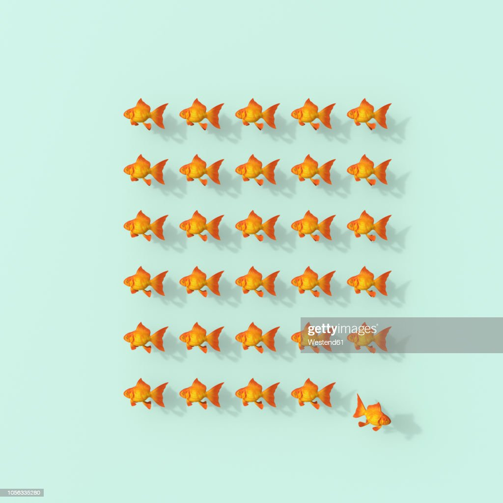 3D rendering, Rows of goldfish on green backgroung with fish leaving the group : Stock Illustration