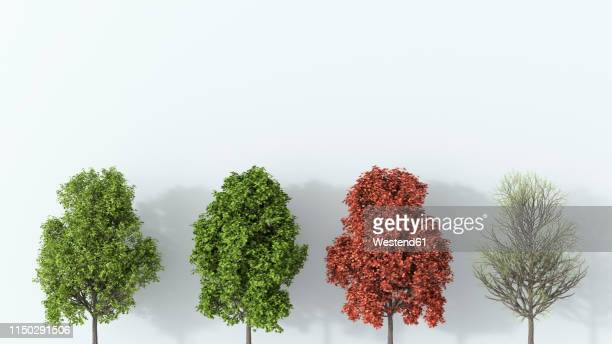 3d rendering, tree in the four seasons - season stock illustrations