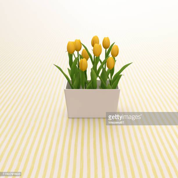 3d rendering, yellow tulips on striped background - freshness stock illustrations