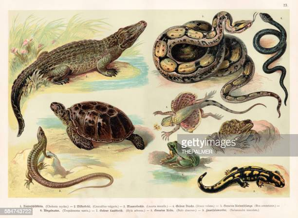 reptiles lithograph 1888 - alligator stock illustrations, clip art, cartoons, & icons