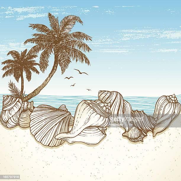 ilustraciones, imágenes clip art, dibujos animados e iconos de stock de playa diseño retro - concha de mar