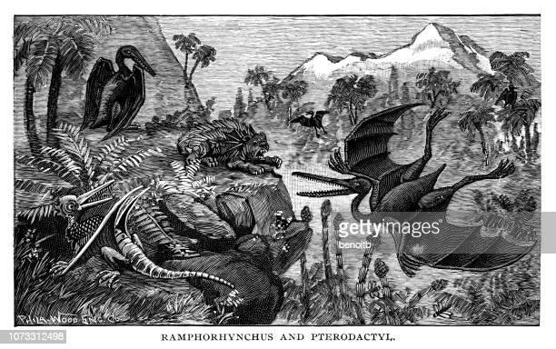 rhamphorhynchus and pterodactyl - jurassic stock illustrations