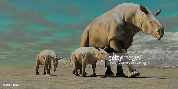 A rhinoceros-like Paraceratherium mother with two twin calves walks along a stoney desert in the Oilgocene Era.