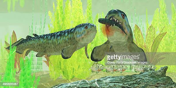 ilustraciones, imágenes clip art, dibujos animados e iconos de stock de rhizodus hibberti, an extinct group of carboniferous predatory lobe-finned fish. - biodiversidad