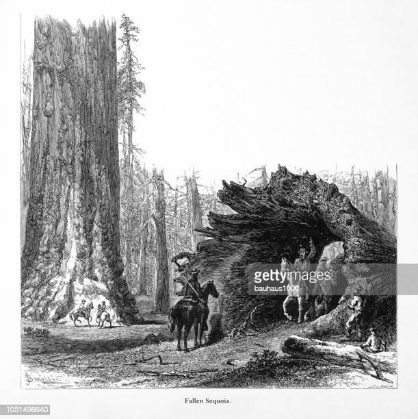 Caballos a través de Secuoyas Gigantes en Mariposa Grove, Valle de Yosemite, Yosemite Parque Nacional, Sierra Nevada, California, American grabado victoriano, 1872