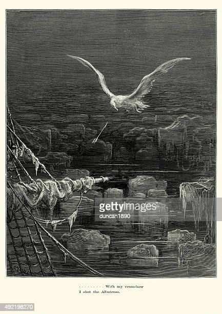 rime of the ancient mariner - i shot albatross - infamous stock illustrations, clip art, cartoons, & icons