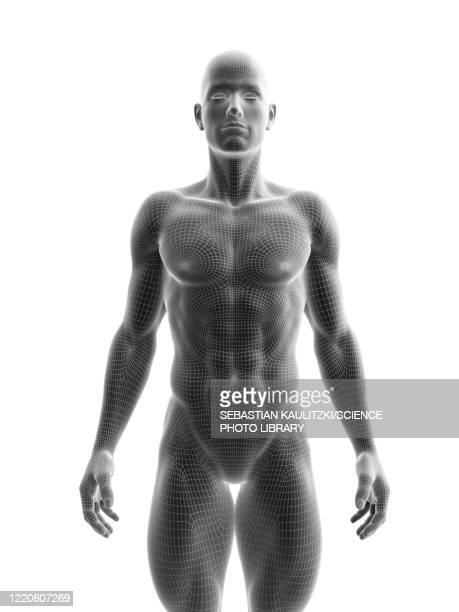 ripped male model , illustration - transparent stock illustrations