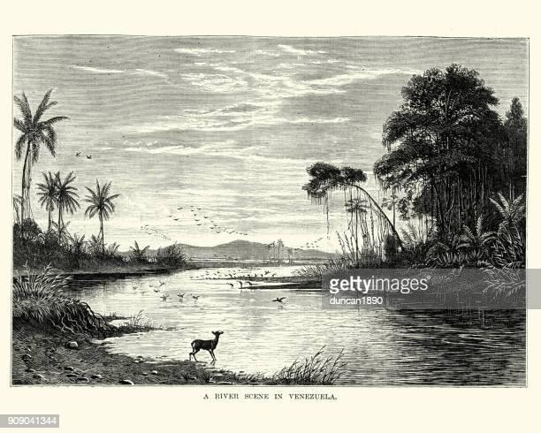 River scene in Venezuela, 19th Century