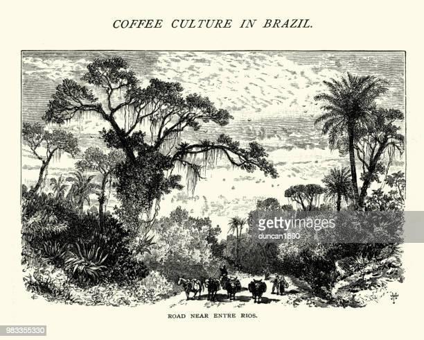 Road near Entre Rios, Santa Catarina, Brazil, 19th Century