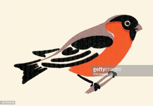 robin - branch stock illustrations