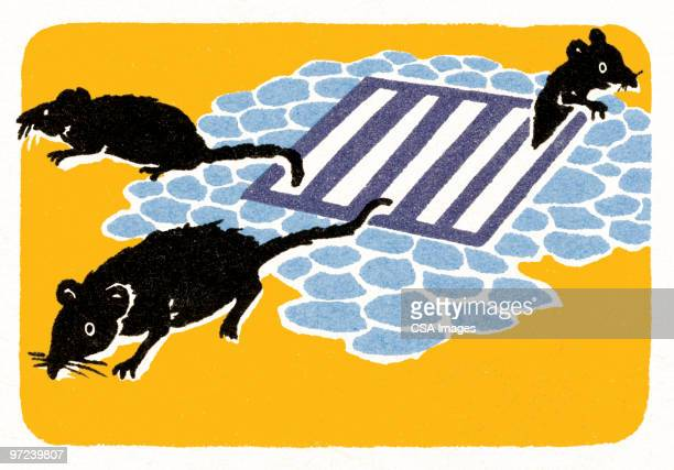 rodents - scavenging stock illustrations