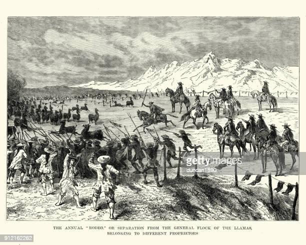 Rodeo, of Llamas, Bolivia, 19th Century