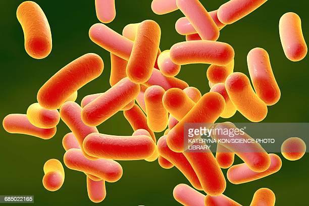 rod-shaped bacteria, illustration - salmonella bacteria stock illustrations