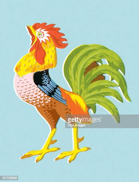 rooster - male animal stock illustrations