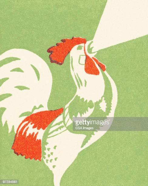 stockillustraties, clipart, cartoons en iconen met rooster - ochtend