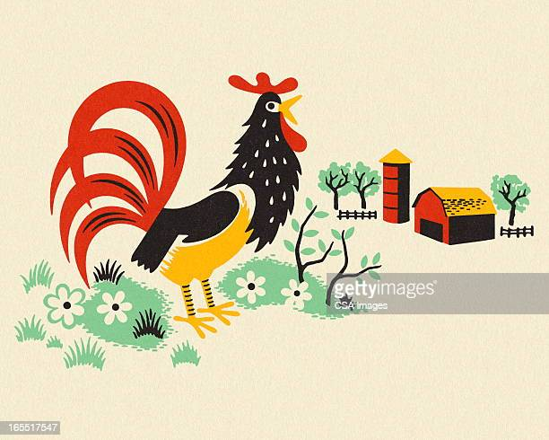 Rooster on a Farm