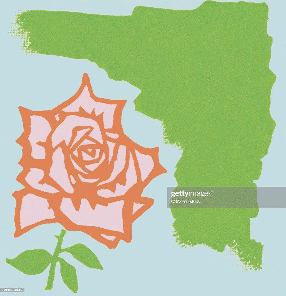 Rose : Stock Illustration