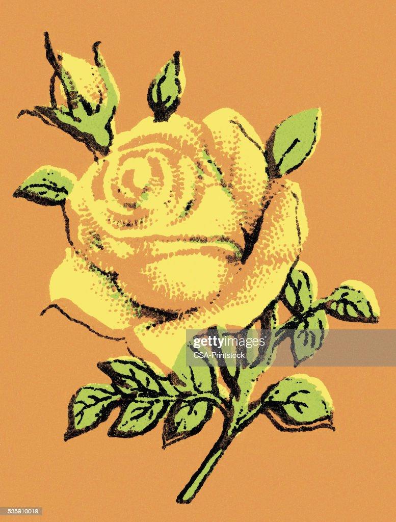 Rose : Ilustração de stock