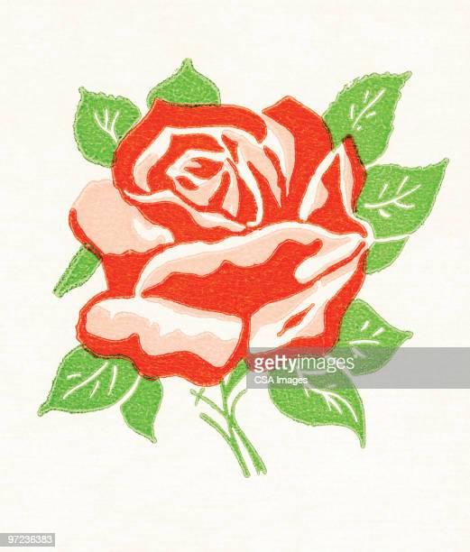 rose - image stock illustrations