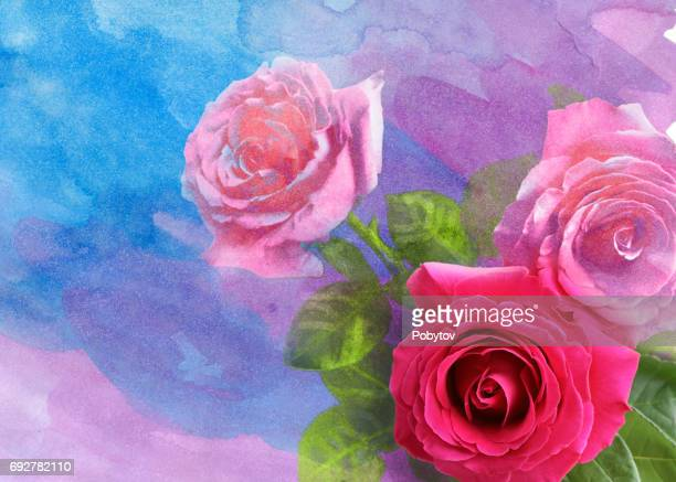 rose watercolor background - rose flower stock illustrations, clip art, cartoons, & icons