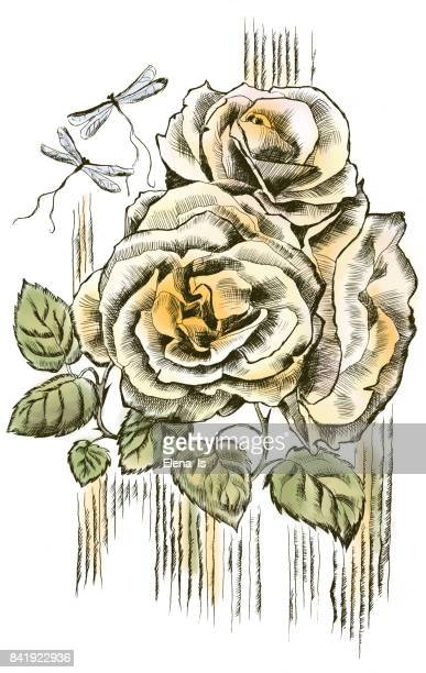 roses are vintage three pieces. engraving with the addition of color. - rose petals stock illustrations, clip art, cartoons, & icons