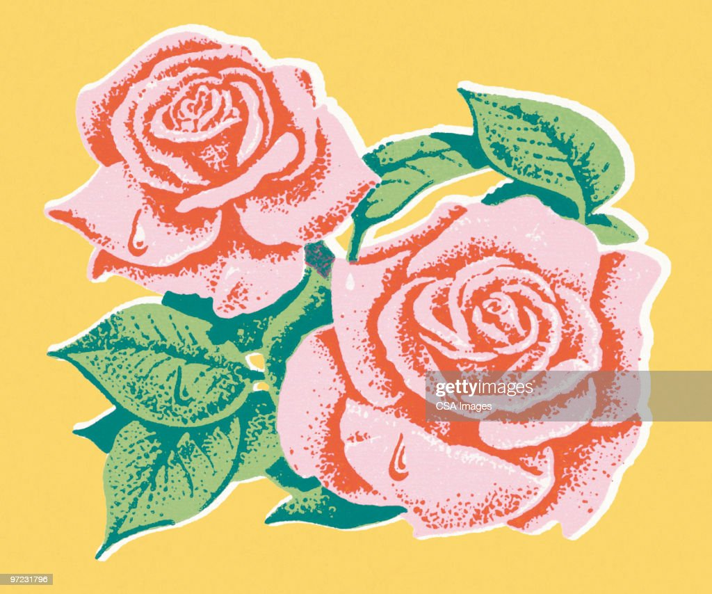 Roses : stock illustration