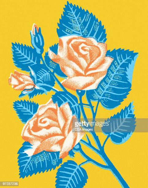 roses - rose flower stock illustrations, clip art, cartoons, & icons