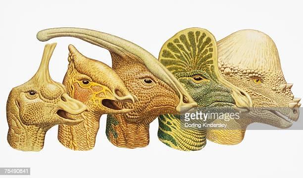 row of five dinosaur heads - hadrosaurid stock illustrations, clip art, cartoons, & icons