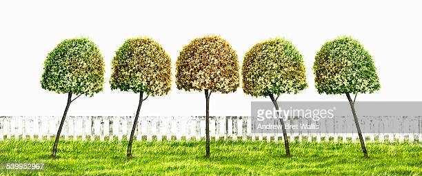 Row of topiary trees lean together in harmony