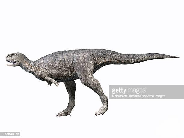 ilustraciones, imágenes clip art, dibujos animados e iconos de stock de rugops primus, late cretaceous of niger. - paleozoología