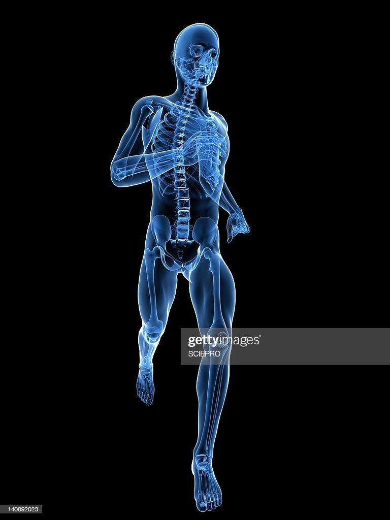 Running skeleton, artwork : Stock Illustration