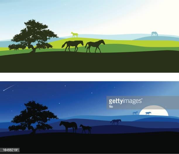 rural scenics - mustang wild horse stock illustrations, clip art, cartoons, & icons