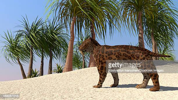 A Saber-Tooth Tiger in a tropical environment.