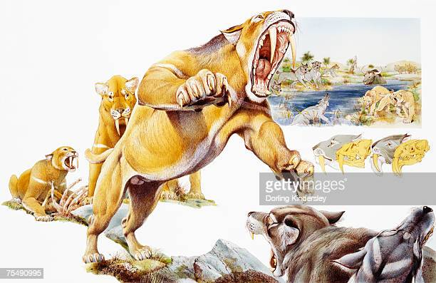 Saber-toothed cat attacking wolves
