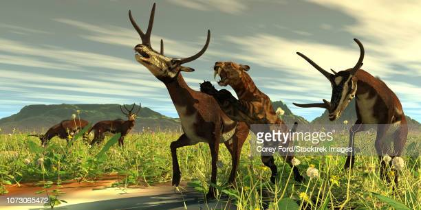 A saber-toothed cat comes out of high vegetation to attack a Kyptoceras deer.