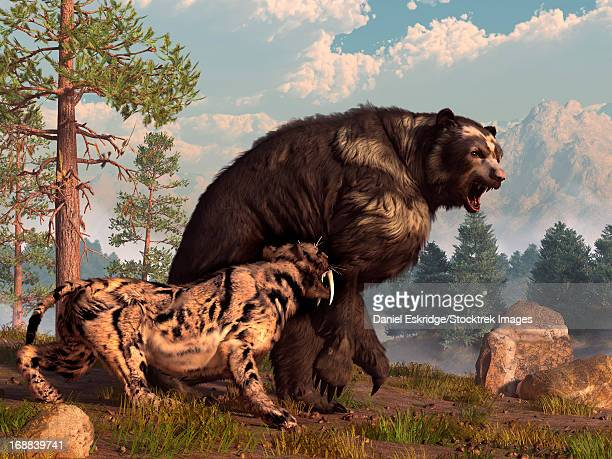 A saber-toothed cat tries to drive a short-faced bear out of its territory. The bear is annoyed and roars back in retaliation.