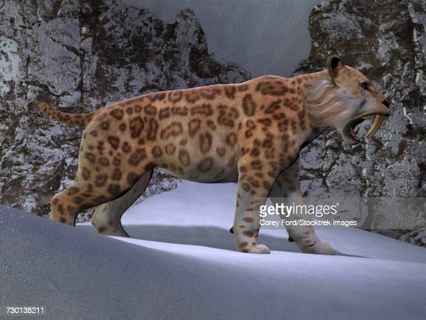 A saber-toothed tiger makes his way through the snow.