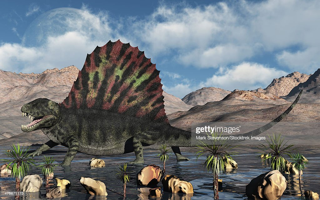 A sail-backed Dimetrodon from Earth's Permian period of time. : stock illustration