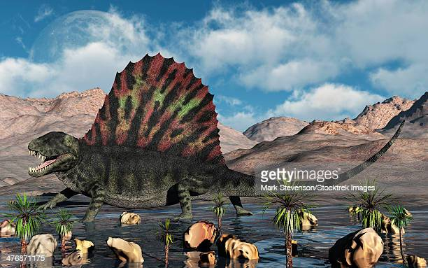 A sail-backed Dimetrodon from Earth's Permian period of time.