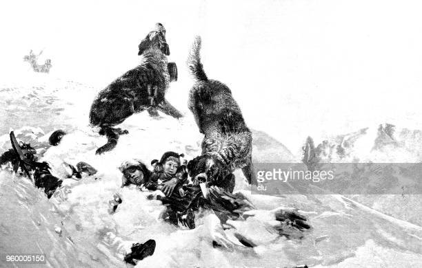 saint bernard dogs discover buried children in the snow - buried stock illustrations, clip art, cartoons, & icons