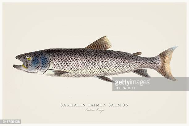 Sakhalin taimen salmon illustration 1856