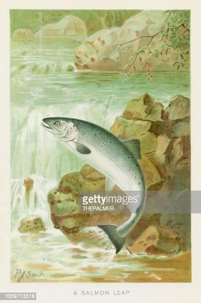 illustrations, cliparts, dessins animés et icônes de saumons sautent chromolithographie 1896 - saumon